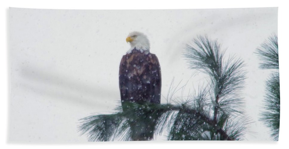 Eagle Bath Sheet featuring the photograph Waiting Out The Snow by Jeff Swan