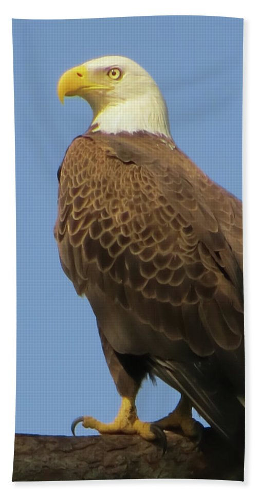 Bald Eagle Bath Sheet featuring the photograph Waiting by Zina Stromberg