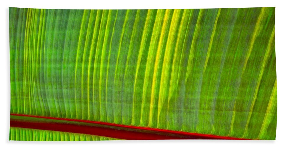 Photograph Of Leaf Bath Sheet featuring the photograph Walk The Line by Gwyn Newcombe