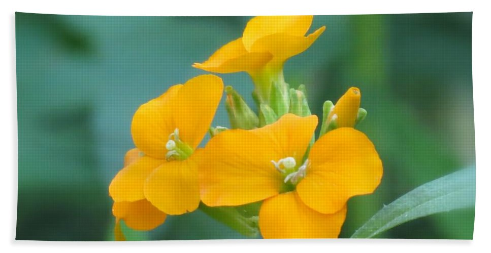 Flowers Hand Towel featuring the photograph Wallflower Orange by MTBobbins Photography