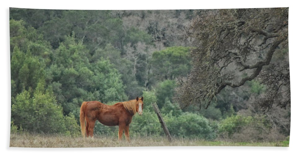Horse Hand Towel featuring the photograph Wanna Ride Little Lady by Donna Blackhall