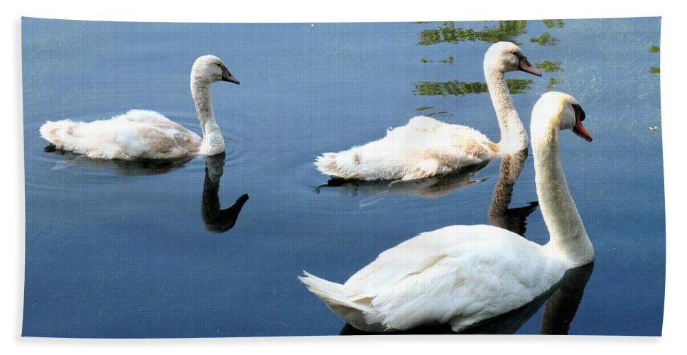 Swans Bath Towel featuring the photograph Ward by Ian MacDonald