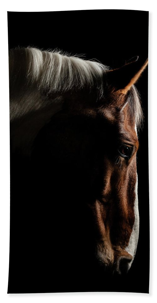 Horse Bath Towel featuring the photograph Warmblood by Samuel Whitton