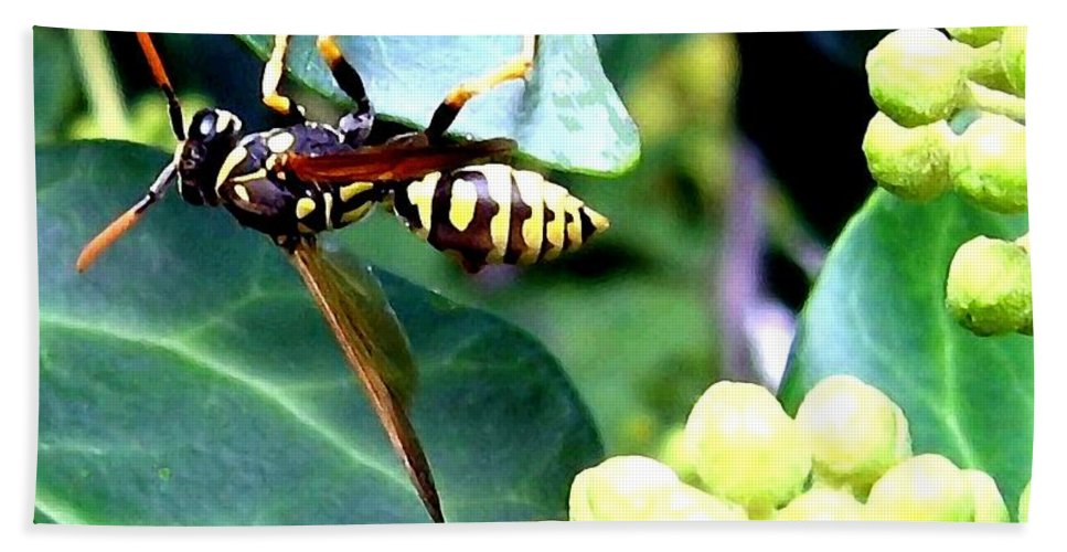 Wasp Bath Sheet featuring the photograph Wasp On The Ivy by Will Borden