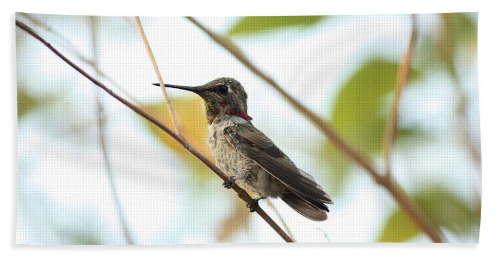 Hummingbird Bath Sheet featuring the photograph Watchful Hummingbird by Carol Groenen