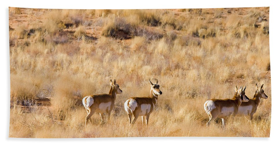 Antelope Bath Sheet featuring the photograph Watchful by Mike Dawson
