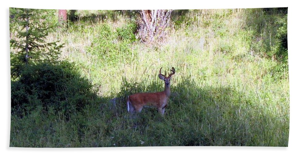 Deer Hand Towel featuring the photograph Watchful by Will Borden