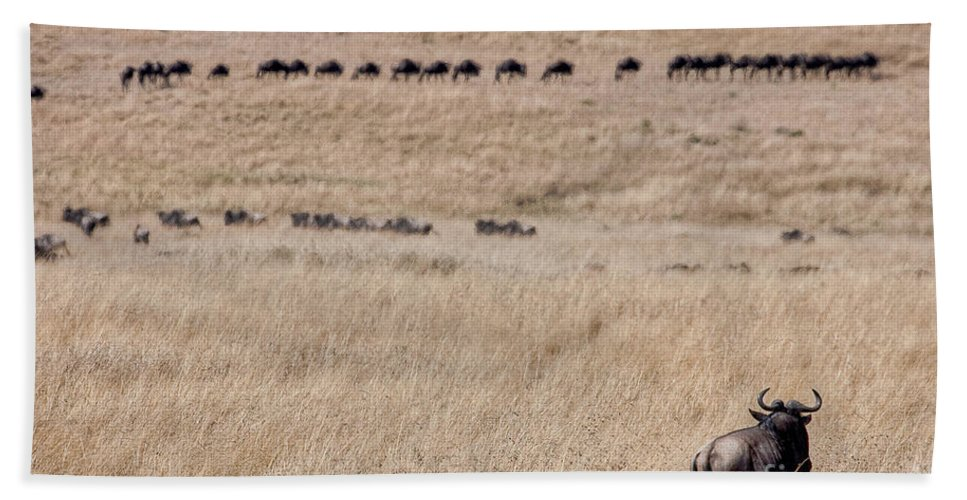 Africa Bath Sheet featuring the photograph Watching The Herd by Colette Panaioti