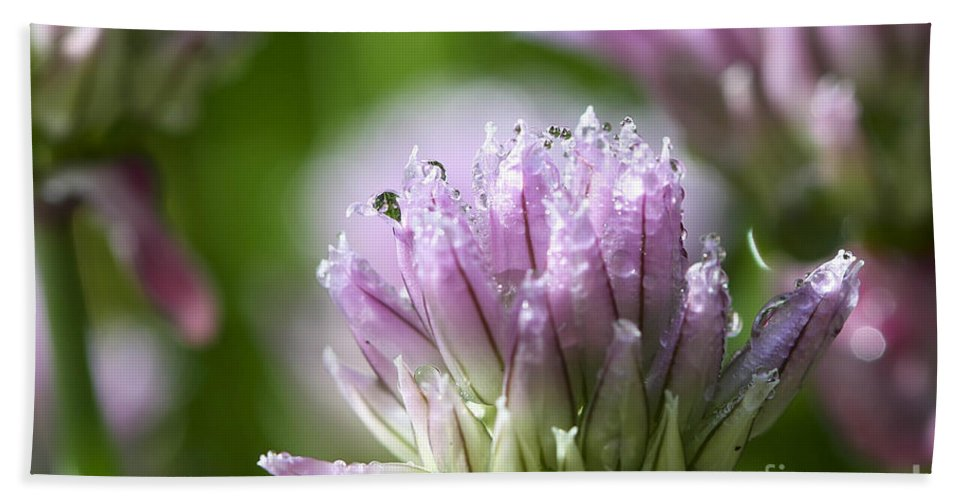 Allium Hand Towel featuring the photograph Water Droplets On Chives Flowers by Teresa Zieba