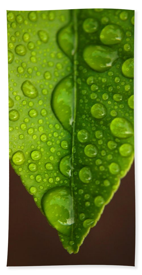 Leaf Hand Towel featuring the photograph Water Droplets On Lemon Leaf by Ralph A Ledergerber-Photography