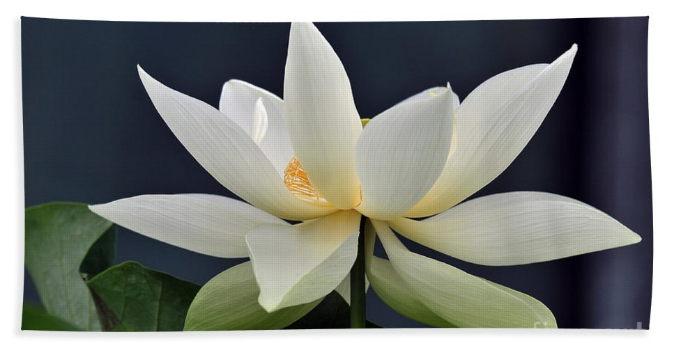 Water Lilies Bath Sheet featuring the photograph Water Lily 36 by Terri Winkler