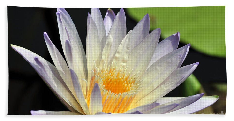 Water Lily Bath Sheet featuring the photograph water lily 48 Green Smoke by Terri Winkler