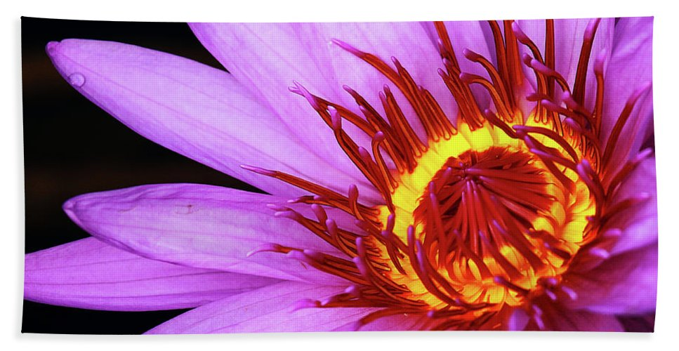 Naples Botanical Garden Hand Towel featuring the photograph Water Lily by Dennis Goodman