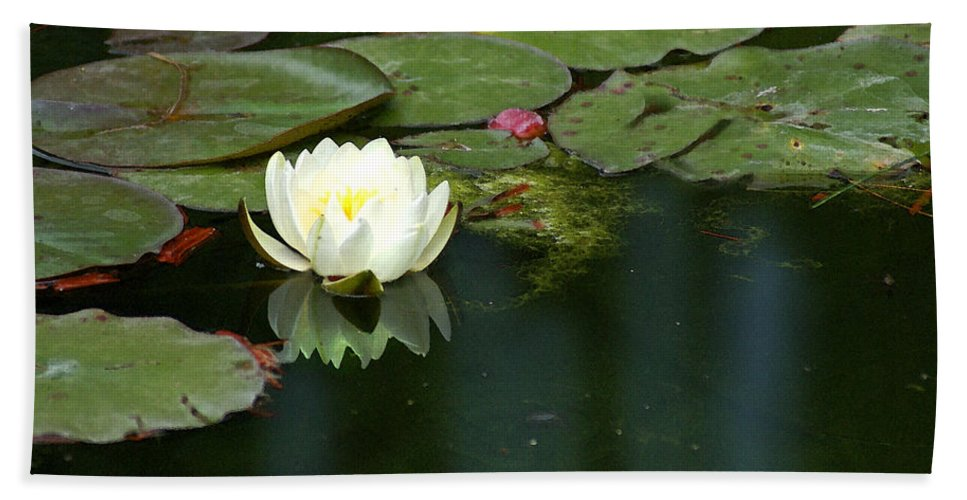 Lily Hand Towel featuring the photograph Water Lily by Heather Coen
