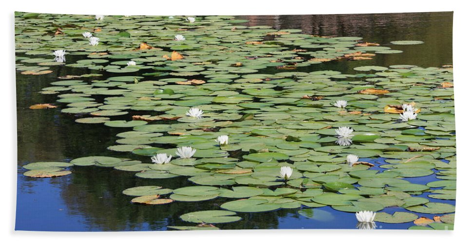 Water Bath Sheet featuring the photograph Water Lily Pond by Carol Groenen