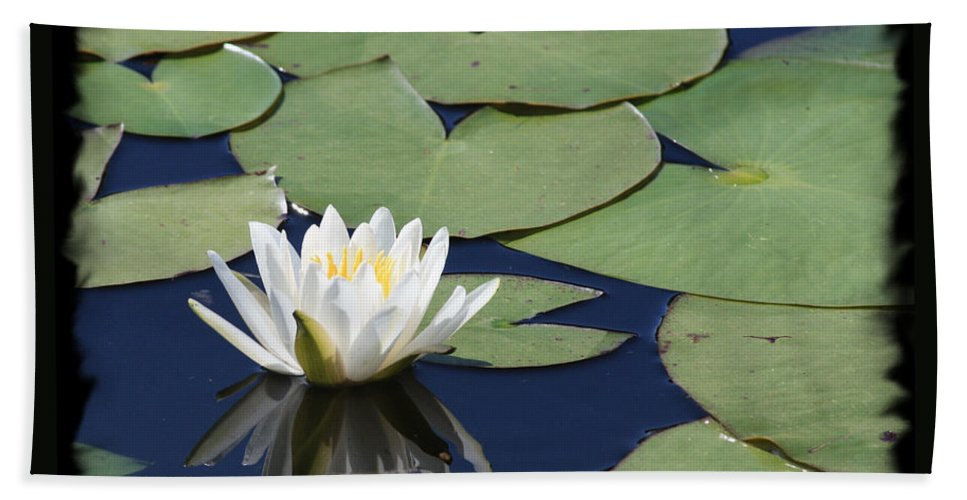 Hand Towel featuring the photograph Water Lily With Black Border by Carol Groenen