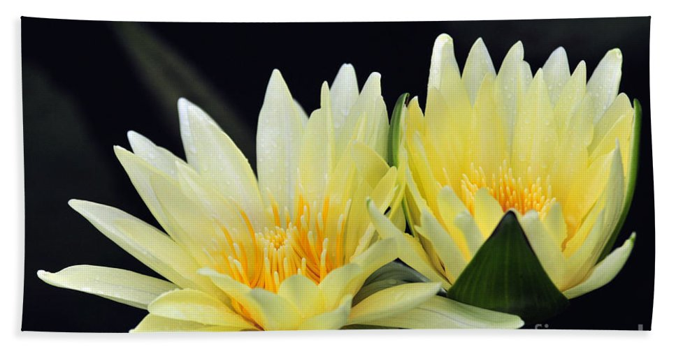 Flower Hand Towel featuring the photograph Water Lily Yellow Nymphaea by Terri Winkler