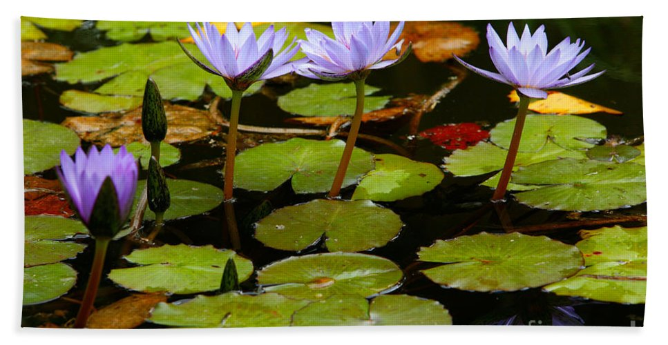 Pond Bath Sheet featuring the photograph Waterlilies by Gaspar Avila