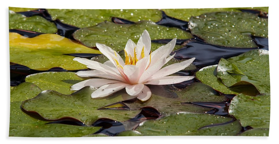Lily Hand Towel featuring the photograph Waterlily On The Water by Michal Boubin