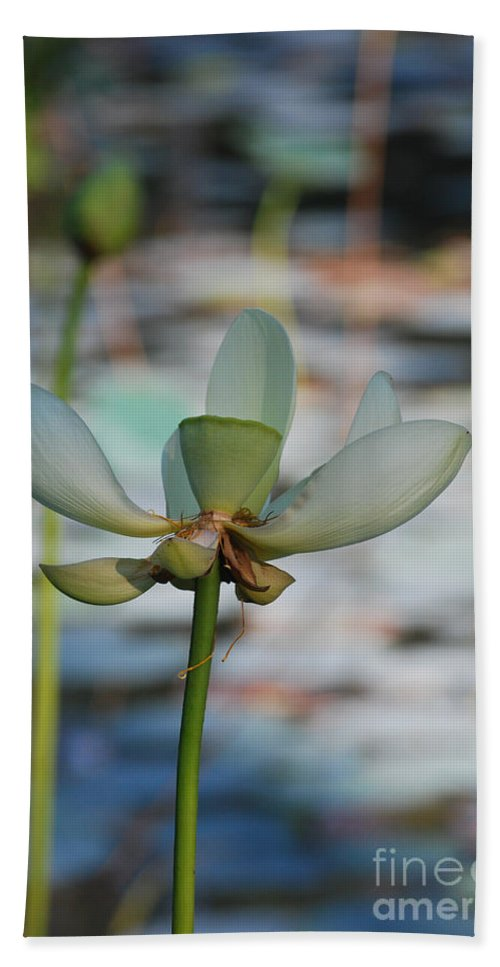 Botanical Bath Sheet featuring the photograph Waterlily Wash Vertical by Heather Kirk