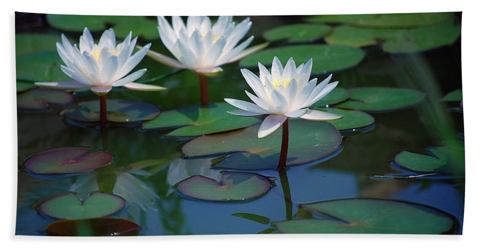 Waterlily Hand Towel featuring the photograph Waterlilys by Robert Meanor