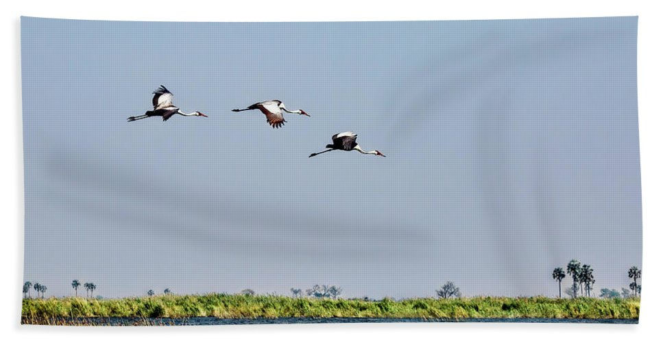 Cranes Bath Sheet featuring the photograph Wattled Cranes In Flight by Kay Brewer