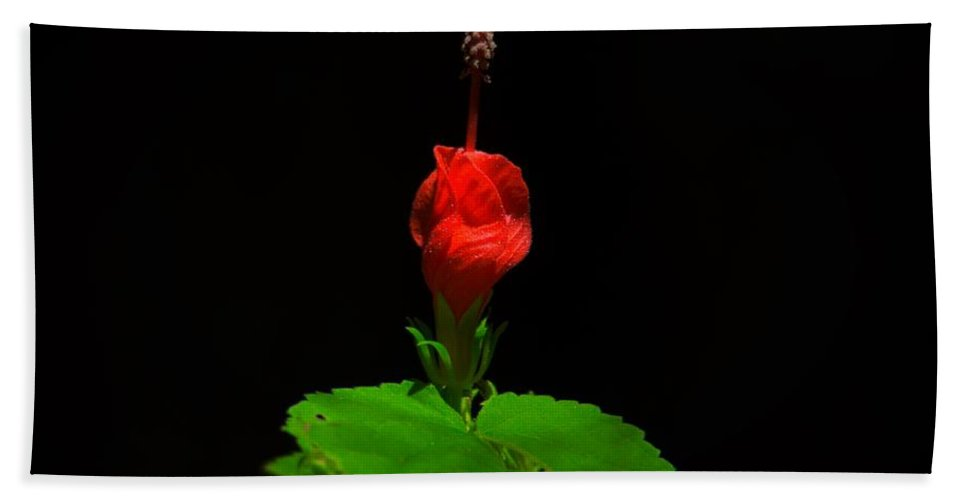 Wax Mallow Hand Towel featuring the photograph Wax Mallow by Dennis Nelson