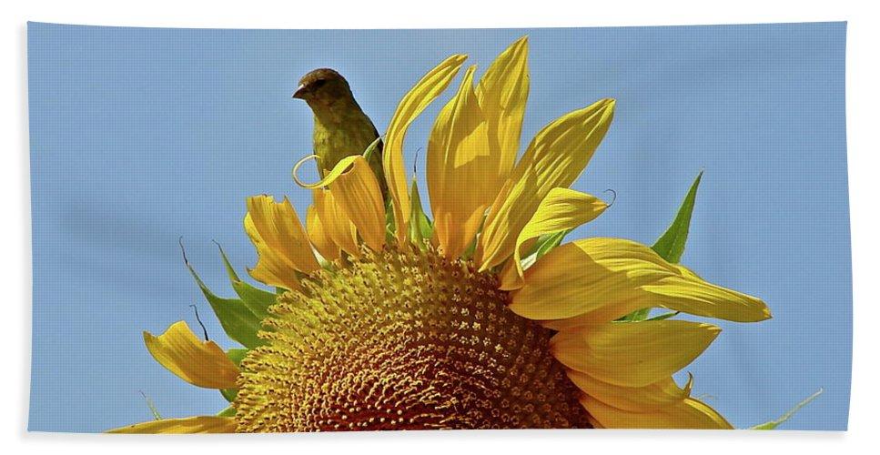 Flower Bath Sheet featuring the photograph We Match by Diana Hatcher