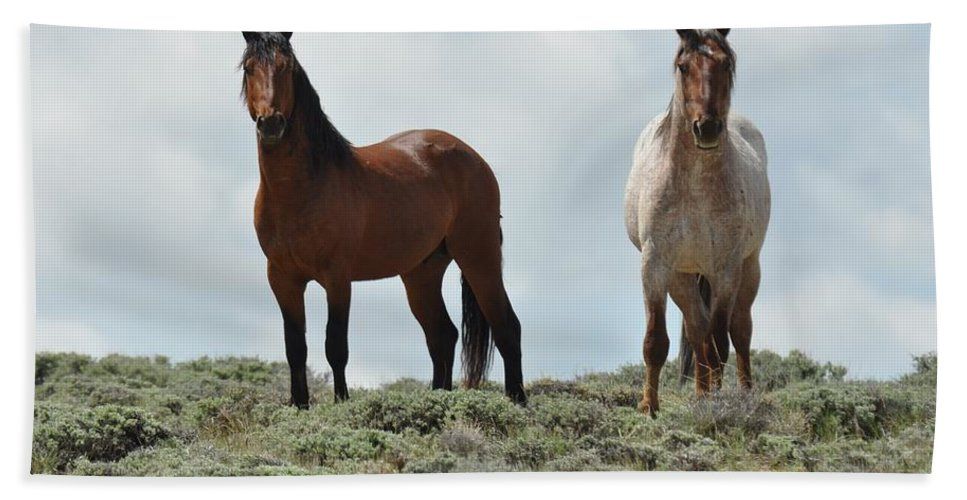 Wild Horses Bath Towel featuring the photograph We See You by Frank Madia