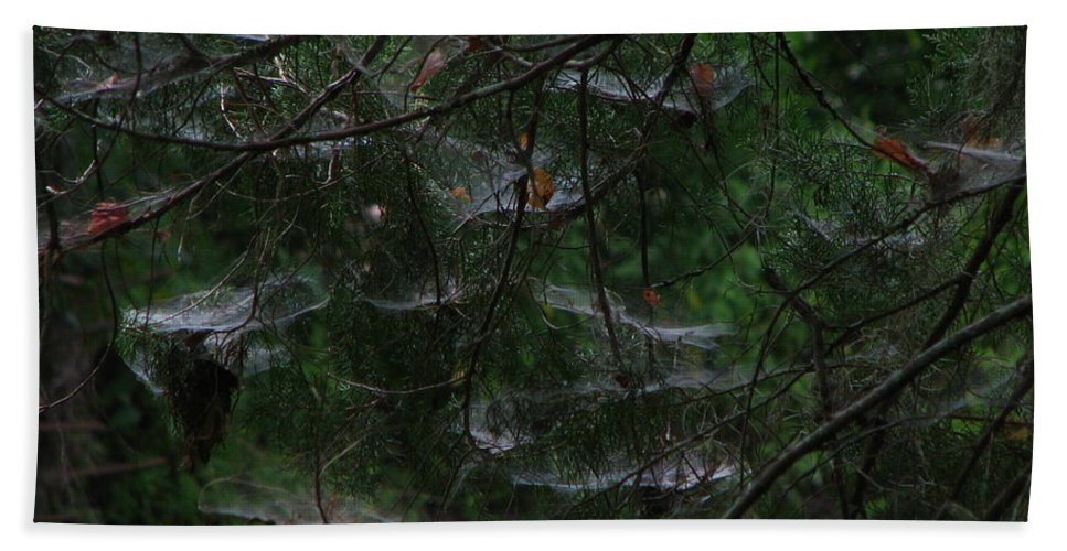 Patzer Bath Sheet featuring the photograph Webs Of A Tree by Greg Patzer