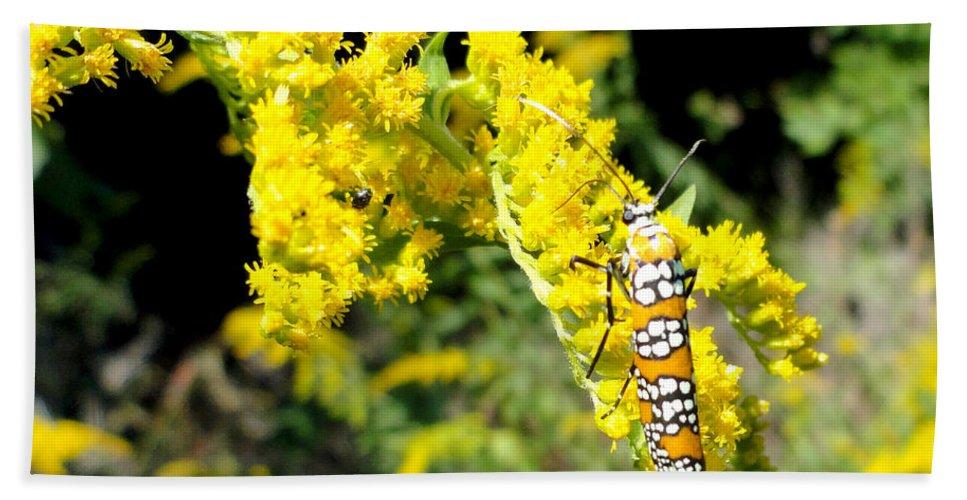 Moths Bath Sheet featuring the photograph Webworm Moth by Trish Hale