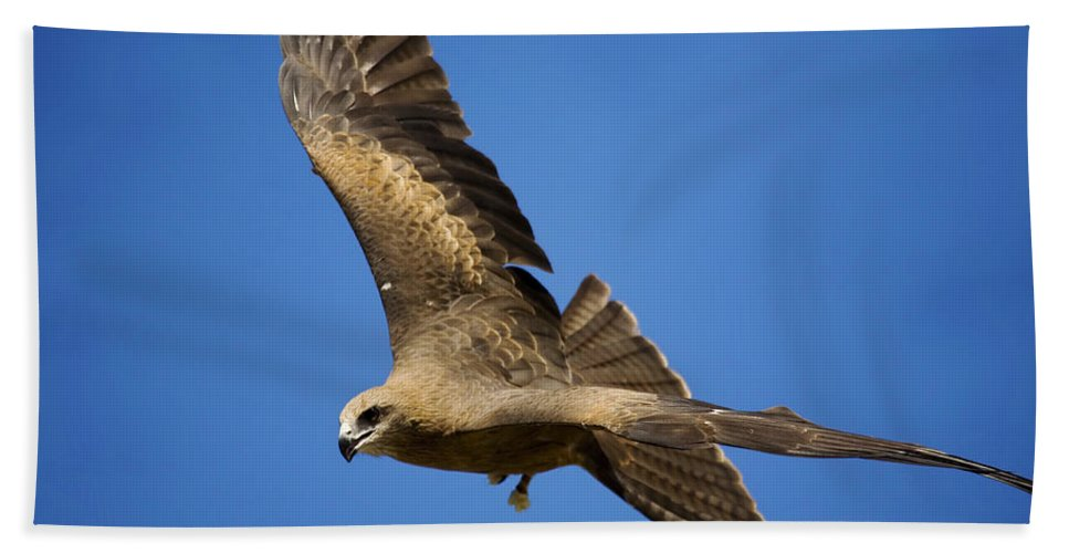 Eagle Hand Towel featuring the photograph Wedgetail Eagle Flight by Mike Dawson