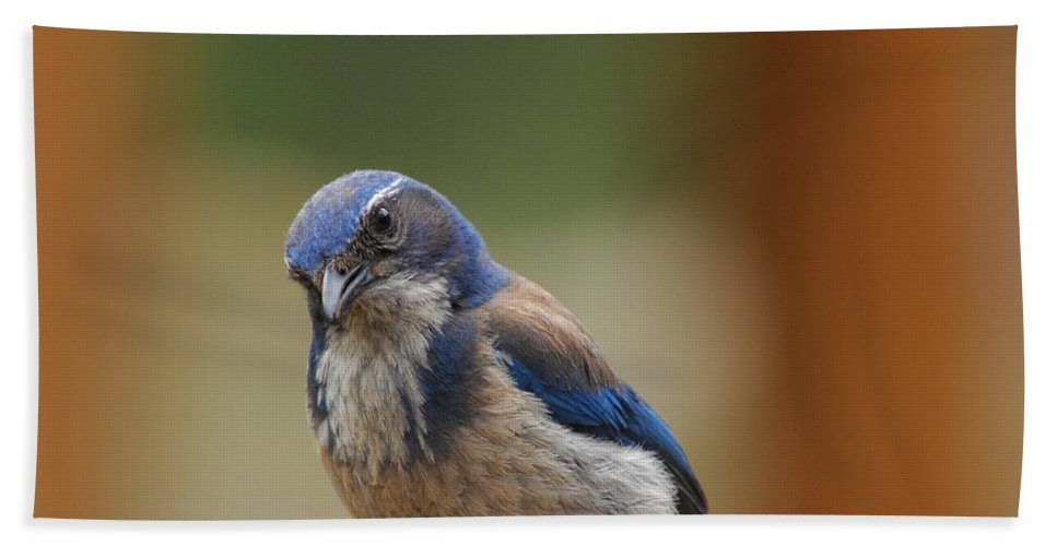 Mountain Blue Bird Hand Towel featuring the photograph Well Hello Beautiful by Donna Blackhall