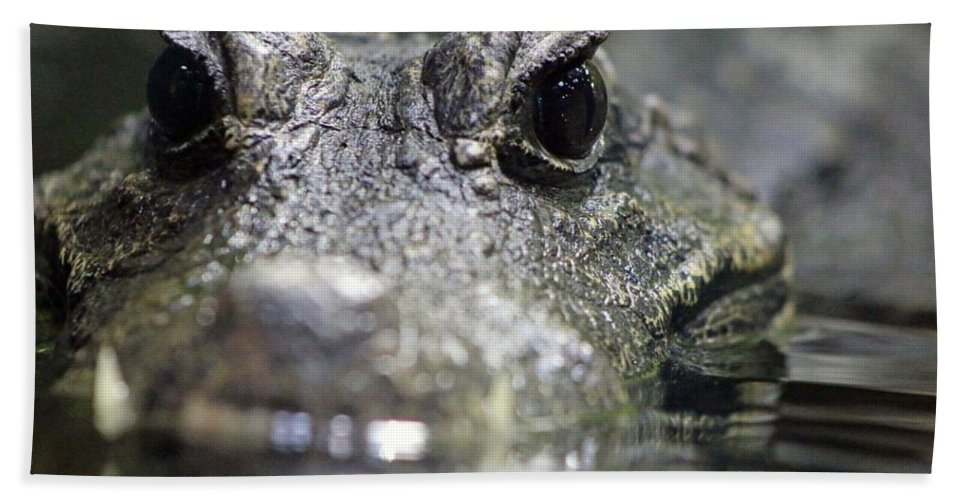 West African Dwarf Crocodile Hand Towel featuring the photograph West African Dwarf Crocodile - Captive 03 by Pamela Critchlow