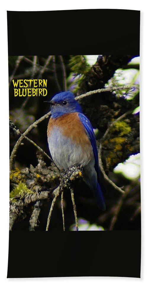 Birds Bath Towel featuring the photograph Western Bluebird by Ben Upham III