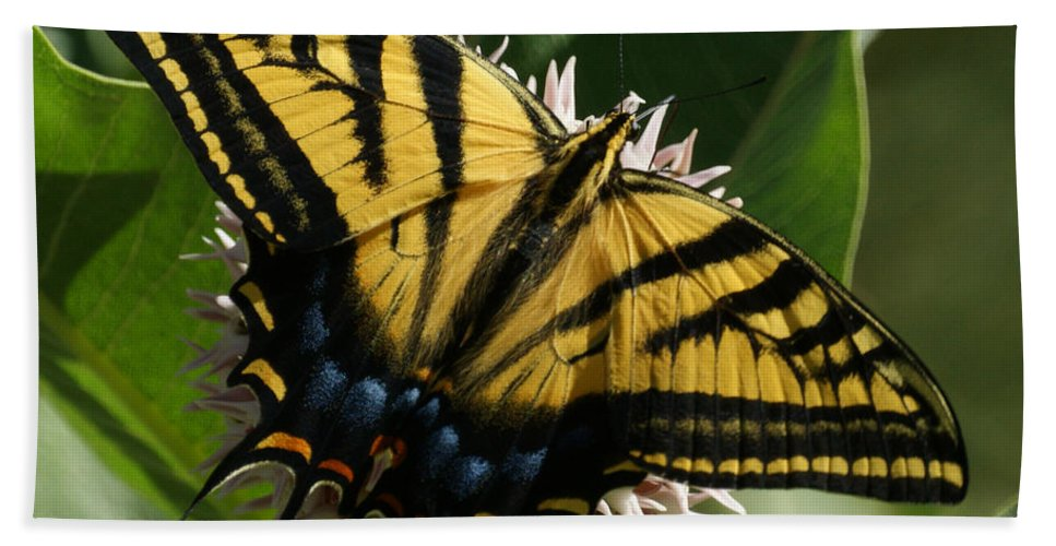 Bugs Hand Towel featuring the photograph Western Tiger Swallowtail 2 by Ernie Echols