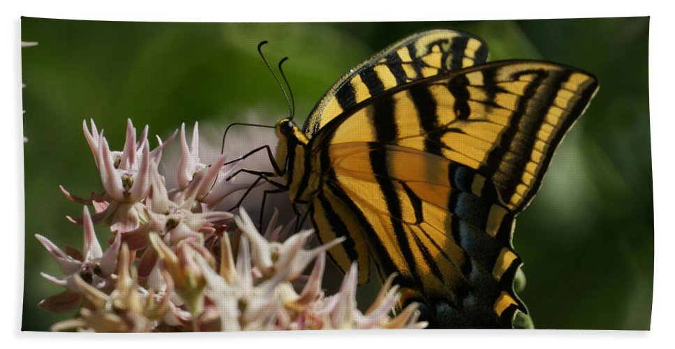 Bugs Hand Towel featuring the photograph Western Tiger Swallowtail by Ernie Echols