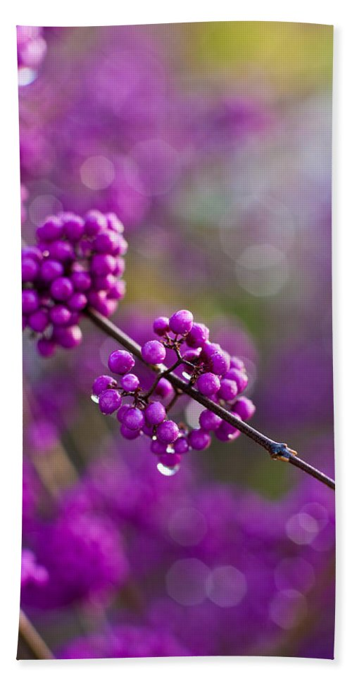 Beauty Berry Bath Sheet featuring the photograph Wet Purple 2 by Mike Reid
