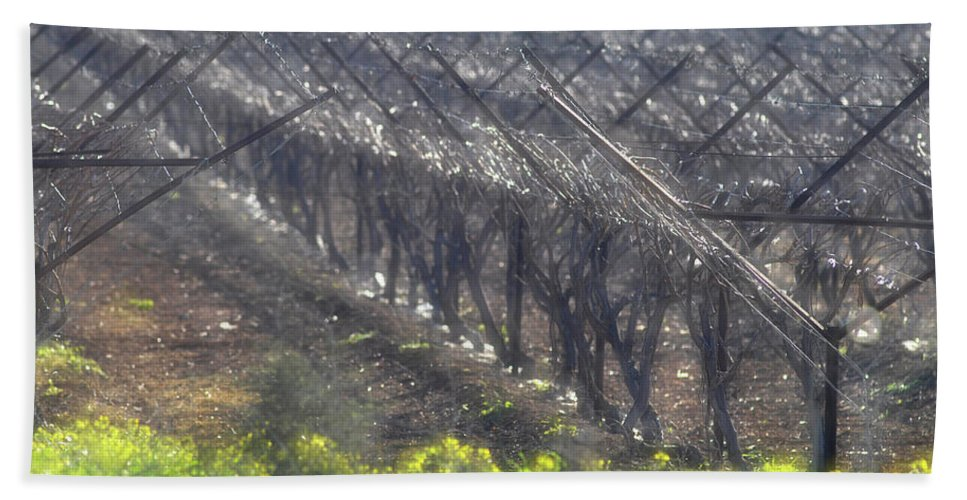 Wet Vineyard At Lachish Hand Towel featuring the photograph Wet Vineyard by Dubi Roman