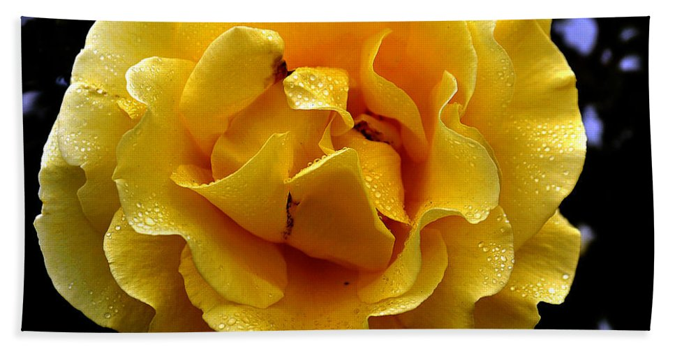Clay Bath Towel featuring the photograph Wet Yellow Rose by Clayton Bruster