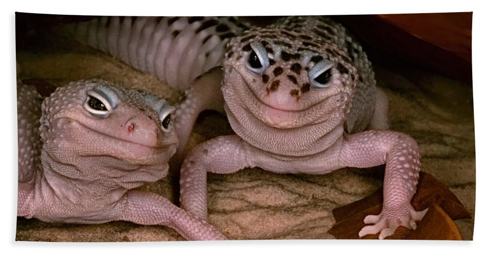 Gecko Bath Sheet featuring the photograph We've Got A Secret - Smiling Leopard Geckos by Mitch Spence