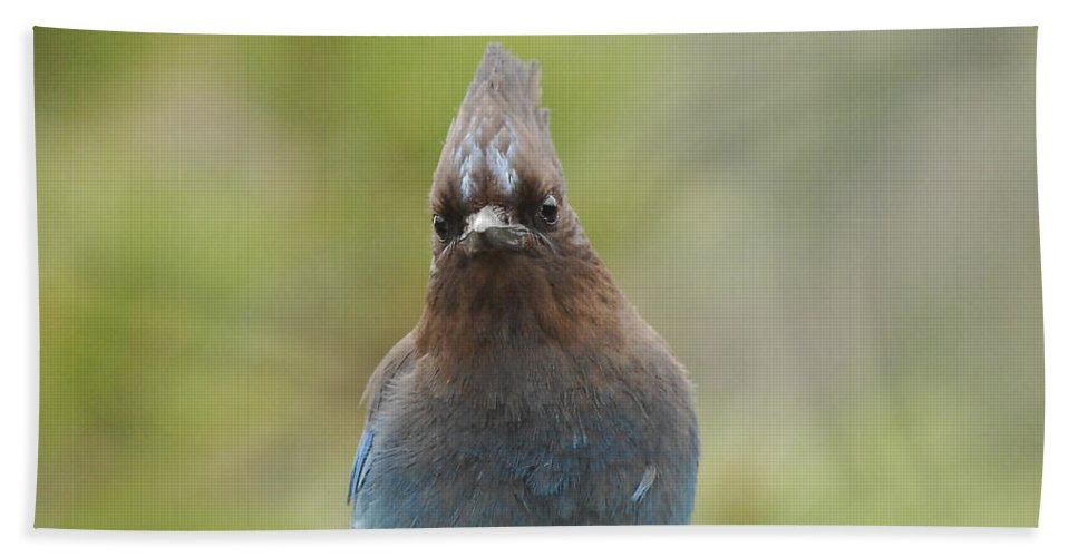 Bird Hand Towel featuring the photograph Whadda You Lookin At by Donna Blackhall