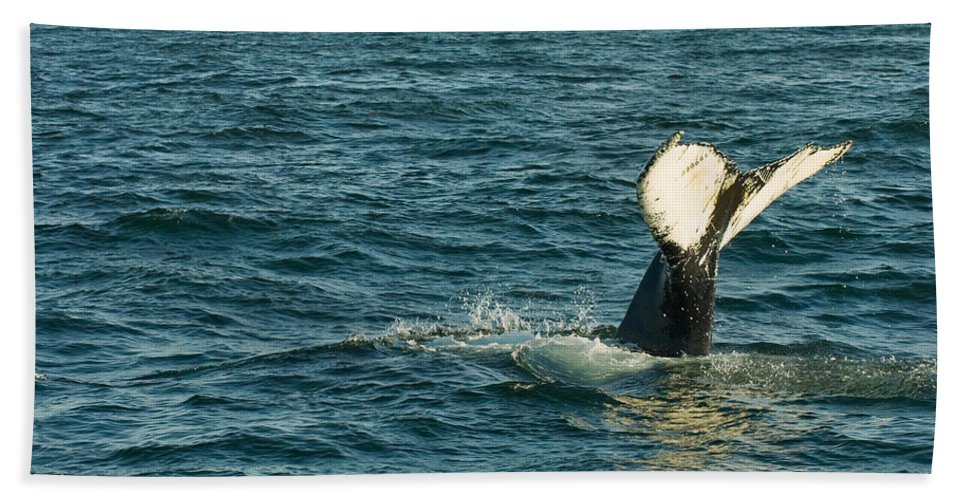 Whale Hand Towel featuring the photograph Whale by Sebastian Musial