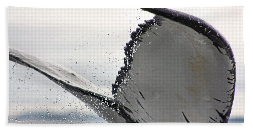 Humpback Bath Sheet featuring the photograph Whale Tail Close Up by Kristin Elmquist