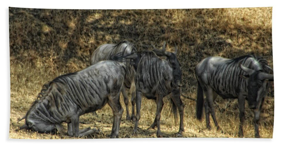Wildebeast Bath Sheet featuring the photograph What A Bewildering Day by Donna Blackhall