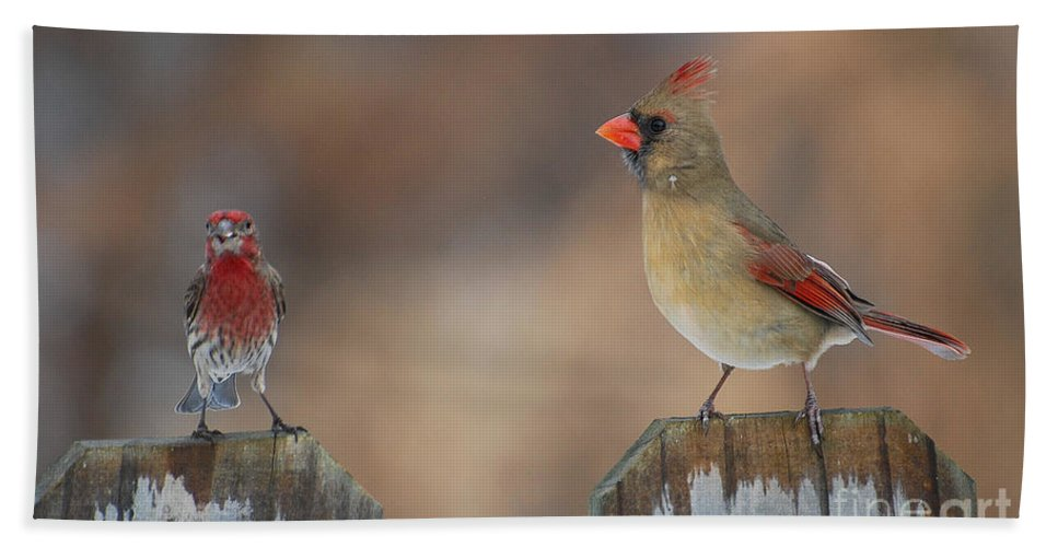 Cardinal Bath Sheet featuring the photograph Whats Up by Todd Hostetter