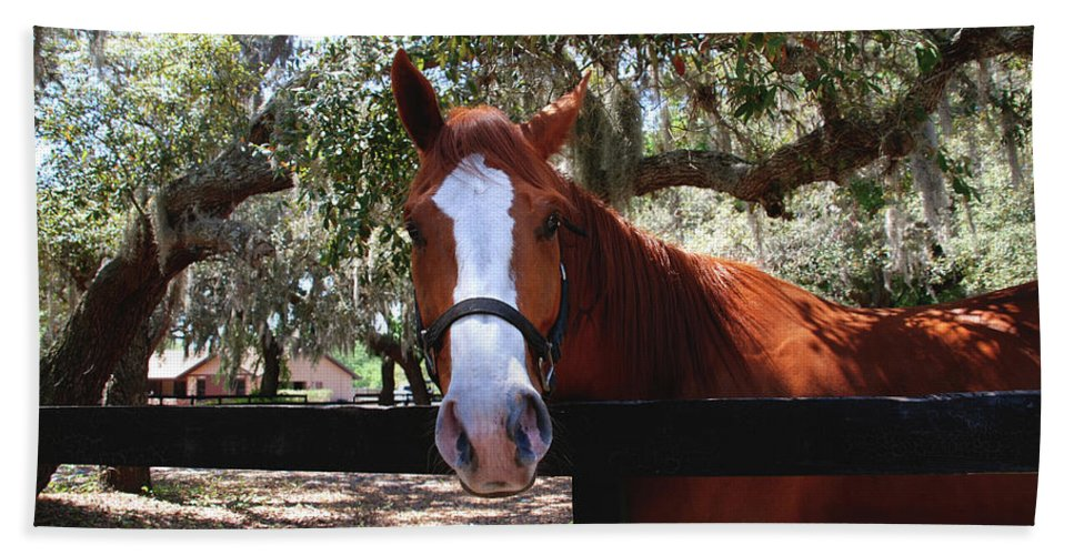 Horse Bath Sheet featuring the photograph Whats Your Name by Susanne Van Hulst