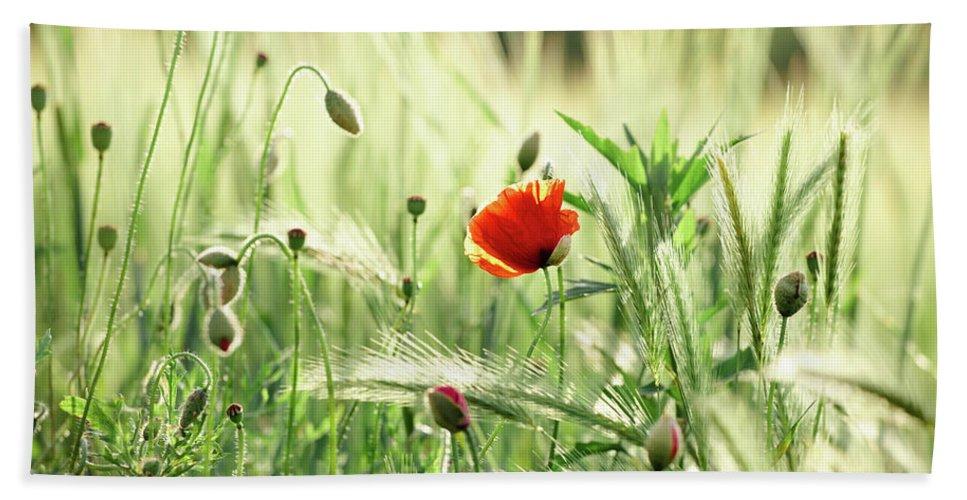 Wheat And Poppy Flowers By Svetlana Imagineisle Bath Towel For Sale