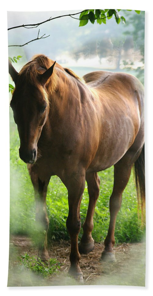 Jenny Gandert Bath Sheet featuring the photograph When You Dream Of Horses by Jenny Gandert
