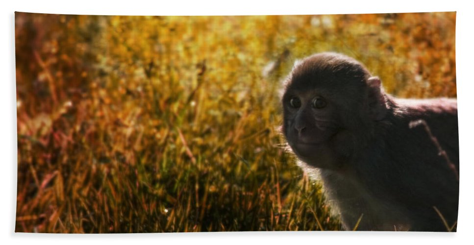 Monkey Bath Towel featuring the photograph Where Are You My Precious by Angel Ciesniarska
